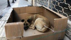 Sokak köpeğine kartondan yuva yaptı - Bursa Haber
