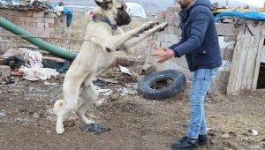 Avrupa'dan Çin'e kadar birçok ülke bu köpeğin peşinde... Fiyatı 30 bin TL