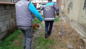 Başıboş pitbull belediye ekipleri tarafından yakalandı - Bursa Haberleri