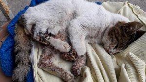 Bunun adı vahşet...Kediye inanılmaz işkence