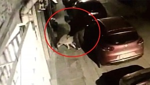 Mahalleli, Köpeğe tecavüz eden sapığı tekme tokat dövdü