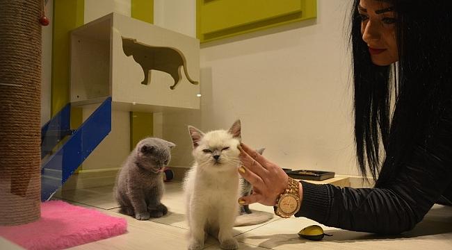 Petshopçulardan merdiven altında hayvan satışı uyarısı - Bursa Haberleri