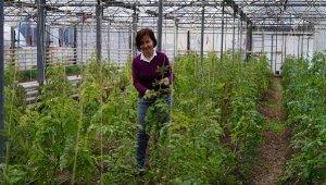 2 Milyon Euro'luk AB projesi ile domates sektörüne yenilikçi çözümler aranacak - Bursa Haberleri