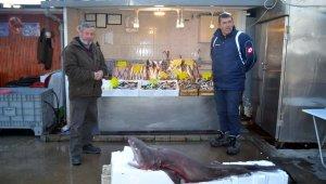 Bursa'da balıkçı ağlarına dev köpek balığı takıldı - Bursa Haberleri