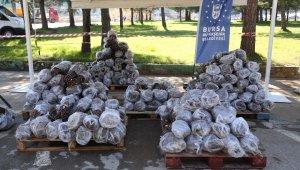 Büyükşehir'den üreticiye 31 bin ahududu fidanı - Bursa Haberleri