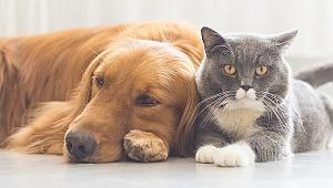 Evde hayvan besleyenlere önemli uyarı... Sanıldığından daha tehlikeli...