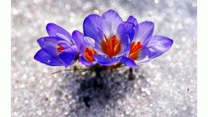 Karları eriten güzellik - Bursa Haberleri