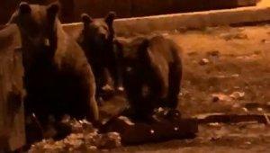 Kış uykusundan uyanan ayıların meraklı vatandaşlarla imtihanı - Bursa Haberleri