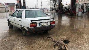 Köpeği otomobilin arkasında sürükleyen sürücüye ceza