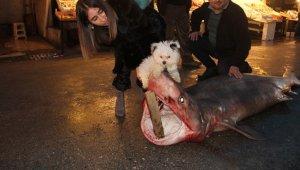 Mersin'de dev köpekbalığı yakalandı