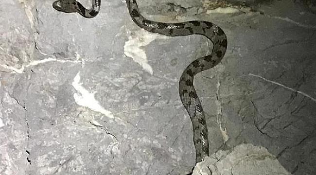 Yengeç ararken nadir görülen yılan türüyle karşılaştı