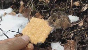 Fareye elleriyle bisküvi yedirdi