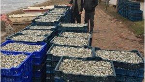 İznik'te gümüş balığı bereketi - Bursa Haberleri
