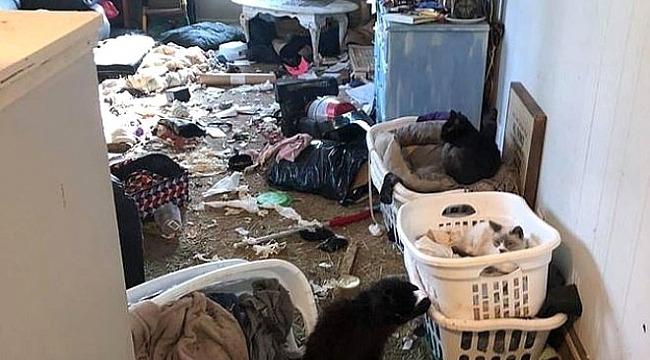 Kan donduran olay... 63 kediyi öldürüp buzluğunda sakladı