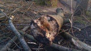Kestiği ağacın altında kalan bir kişi hayatını kaybetti