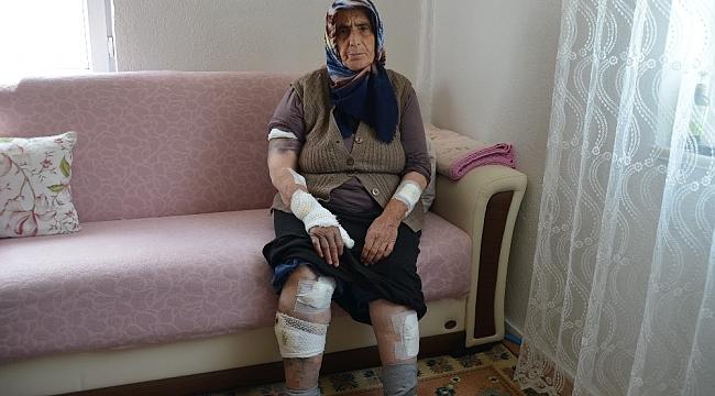 Köpeklerin saldırdığı yaşlı kadını ölümden komşuları kurtardı
