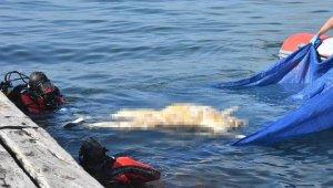 Korkunç olay... Çocuk parkı önünde kıyıya ceset vurdu