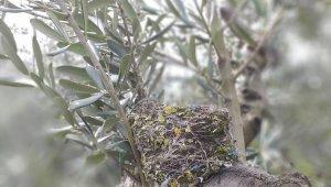 Kuşlar ölmesin diye ağaçlarını budamıyorlar - Bursa Haberleri
