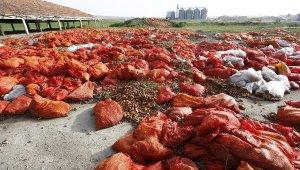 Polatlı'da tonlarca çürümüş soğan atıldı