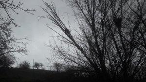 Yavru ayı köpeklerden kaçarak çıktığı ağaçta mahsur kaldı, imdadına köylüler yetişti