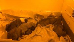 Yavru köpekler ölüme terk edilmiş halde bulundu