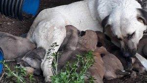 Yine katliam... Köpek ile 3 yavrusu ve 3 kedi öldü