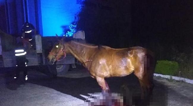 Ahırdan kaçan at, kazada telef oldu - Bursa Haberleri