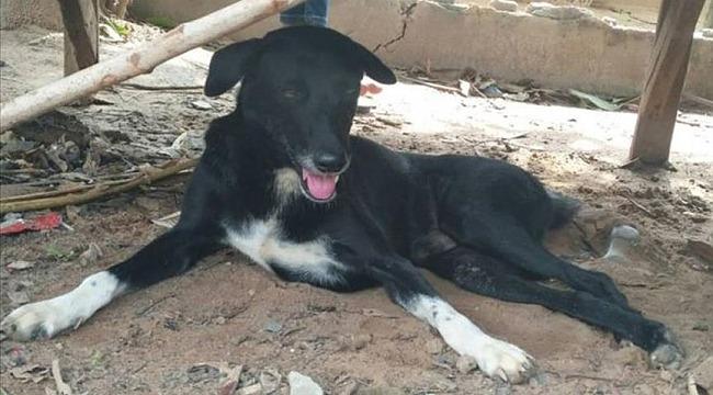 Annesi tarafından canlı canlı gömülen bebeği, köpek kurtardı