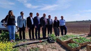 Bursa'da ilk kez Karacabey'de yetiştirilecek - Bursa Haberleri