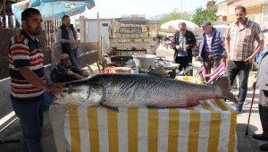 Fırat Nehri'nde yakalandı... Tam 83 kilo