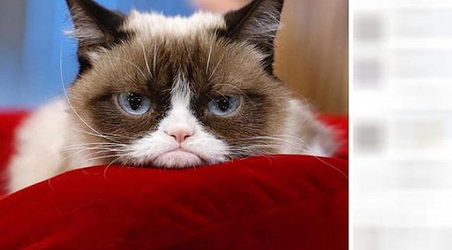 İnterneti kasıp kavuran Huysuz Kedi artık yok
