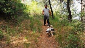 Kilosu 9 bin euroya kadar çıkıyor, bulmak için köpekleriyle arıyor - Bursa Haberleri