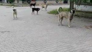 Köpekleri görüntülemek isterken canından oluyordu - Bursa Haberleri