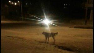 Köpeklerin saldırısına uğrayan 3 çocuk dehşeti yaşadı