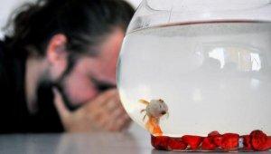 """Prof. Dr. Altun: """"Süs balığı besleyeceksek yaşam hakkına saygı duymalıyız"""" - Bursa Haberleri"""
