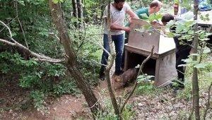 Tedavisi tamamlanan tilki ormana salındı - Bursa Haberleri