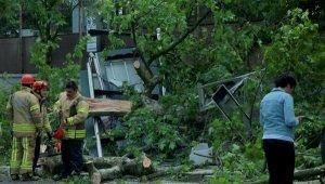 TIR'ın çarptığı ağaç otobüs durağına devrildi, 3 kişi ölümden döndü
