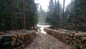 Uludağ'da yol bahanesiyle ağaç kesilmesine tepki - Bursa Haberleri