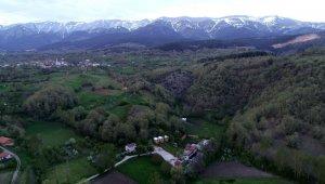 Uludağ'ın kar sularında yetişiyor, İftar sofrasını süslüyor - Bursa Haberleri