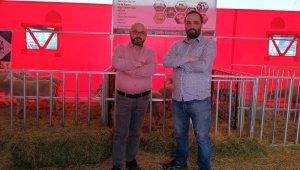 Yenişehir küçükbaş hayvancılık fuarının gözdesi oldu - Bursa Haberleri