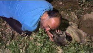 Araç çarpan köpeğinin başında göz yaşı döktü - Bursa Haberleri
