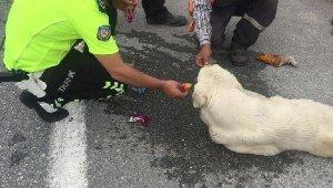 Bitkin düşen köpeğe polis şefkati - Bursa Haberleri