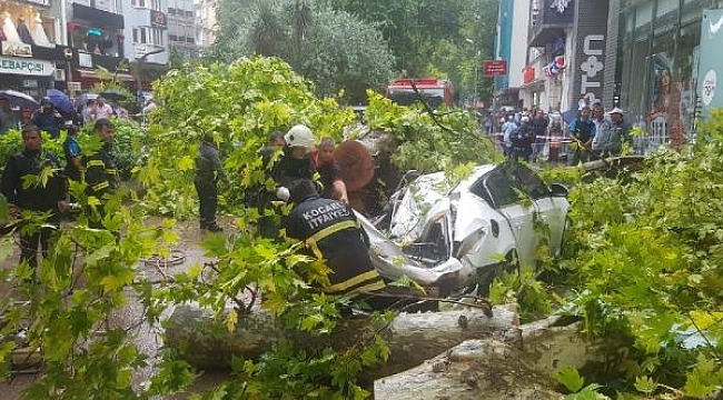 Çınar ağacı otomobilin üzerine devrildi... Faciadan dönüldü