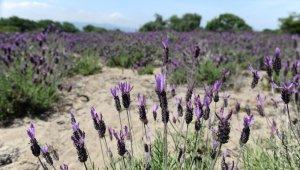 Doğal şifa kaynağının güzelliği havadan görüntülendi - Bursa Haberleri