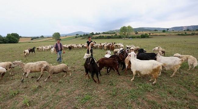 Hayvancılığın canlanması için meralar ıslah ediliyor - Bursa Haberleri