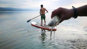 İznik Gölü'nde balık ölümleri - Bursa Haberleri