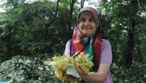 Karacabey ıhlamur ormanlarında hasat başladı - Bursa Haberleri