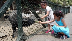 Karneyi alan Hayvanat Bahçesi'ne koştu - Bursa Haberleri