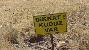 Köpek kuduz çıktı, köy karantinaya alındı