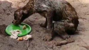 Korkunç olay: Köpekleri çuvala koyup ölüme terk ettiler